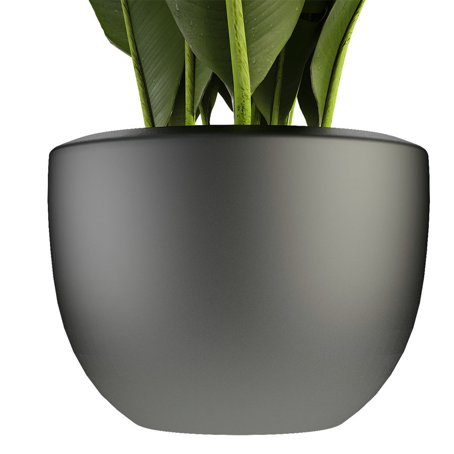 Collecties Planten 3 royalty-free 3d model - Preview no. 7