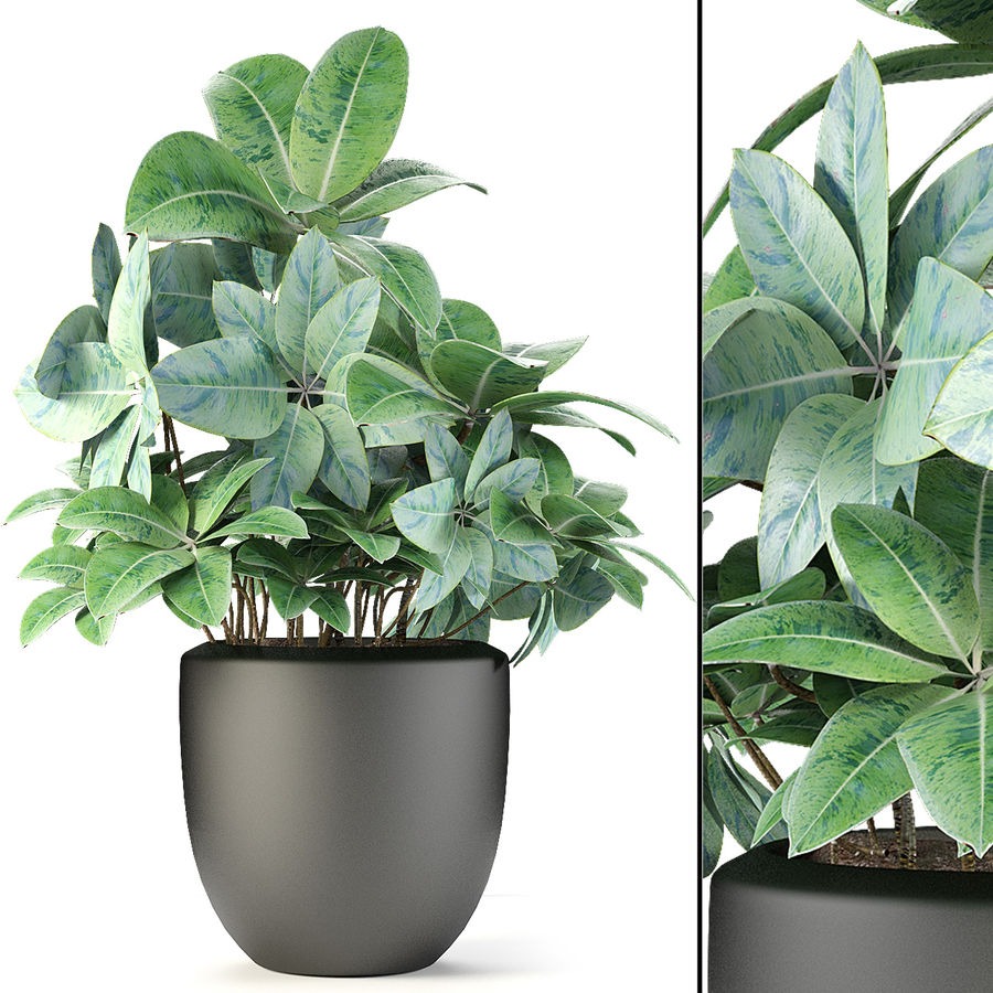 Collecties Planten 3 royalty-free 3d model - Preview no. 16