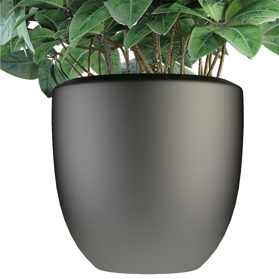 Collecties Planten 3 royalty-free 3d model - Preview no. 20