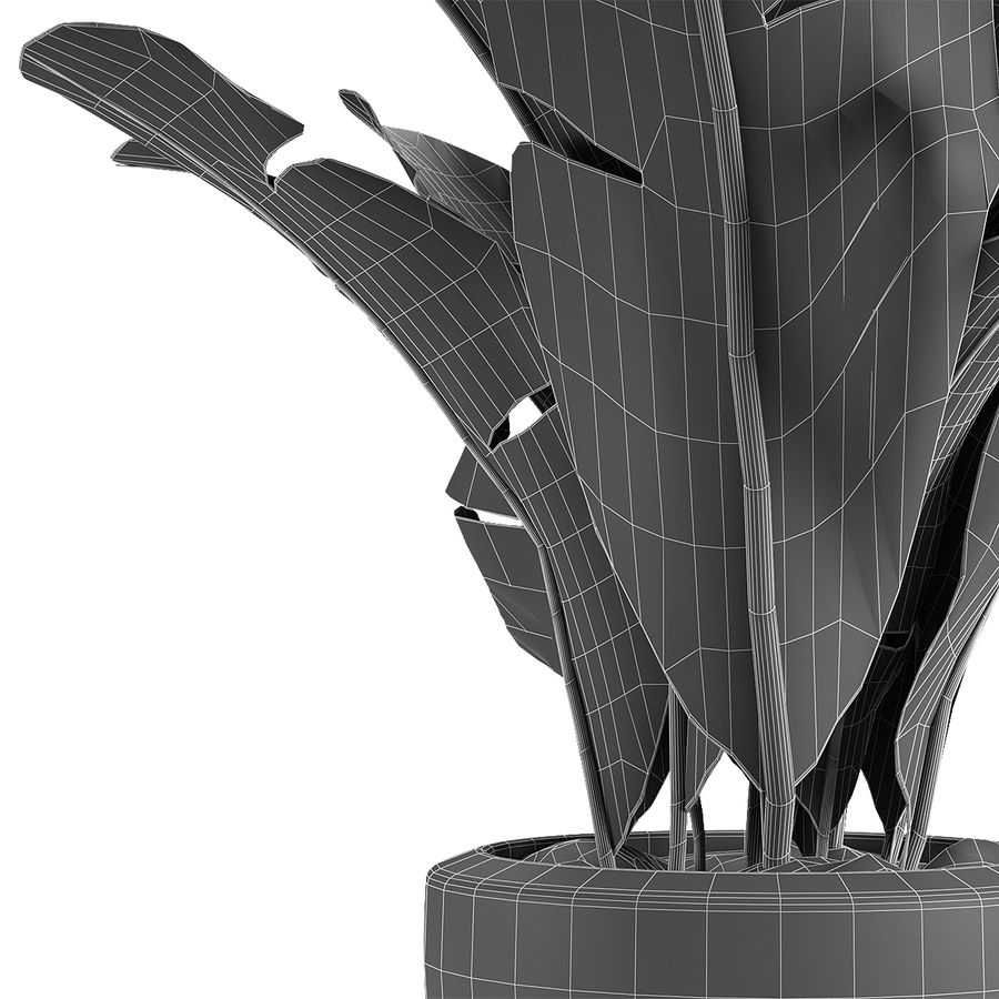 Collecties Planten 3 royalty-free 3d model - Preview no. 6