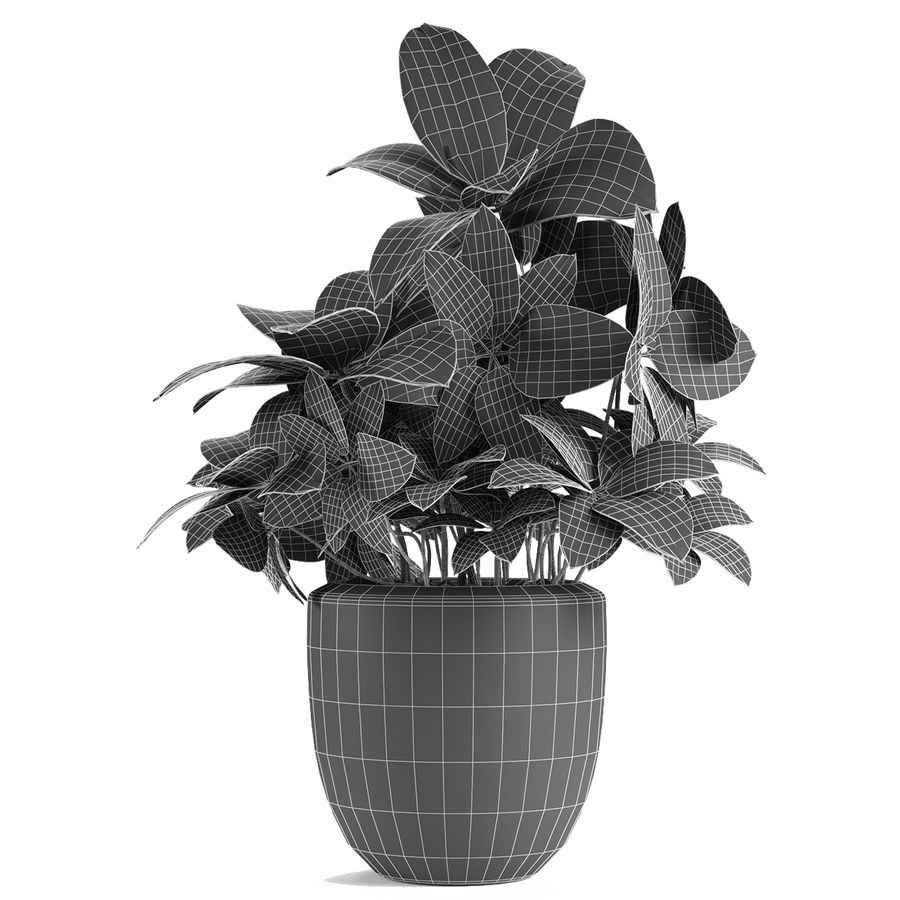 Collecties Planten 3 royalty-free 3d model - Preview no. 21