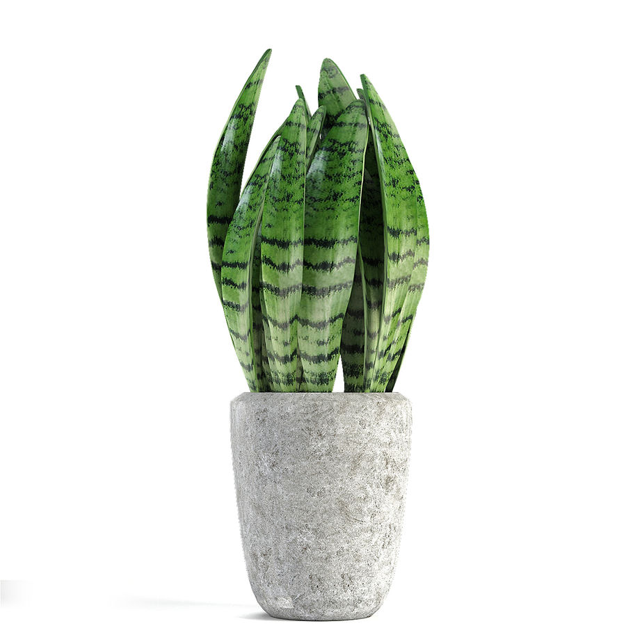 Collecties Planten 3 royalty-free 3d model - Preview no. 25