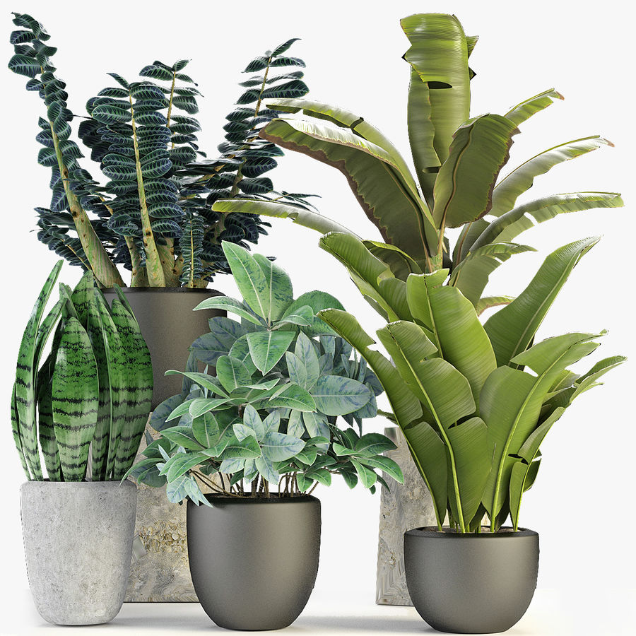 Collecties Planten 3 royalty-free 3d model - Preview no. 1