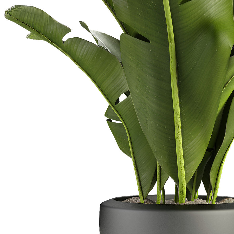 Collecties Planten 3 royalty-free 3d model - Preview no. 5