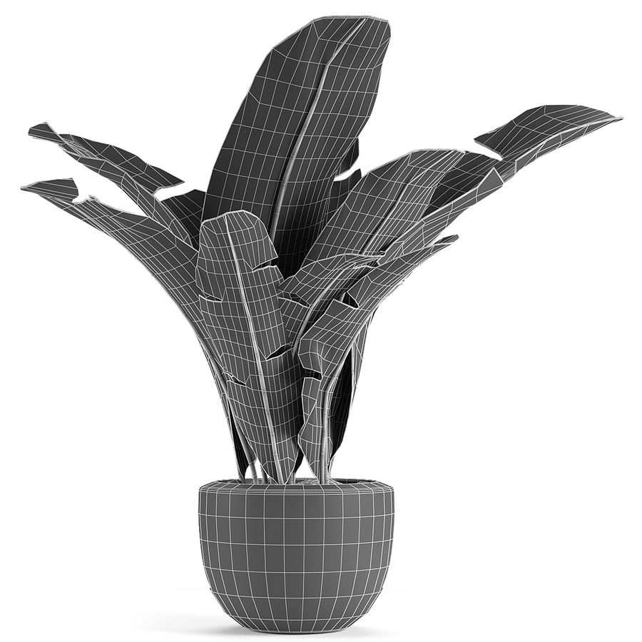 Collecties Planten 3 royalty-free 3d model - Preview no. 4