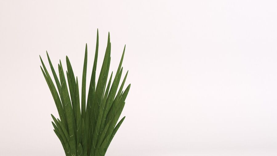 Flax Green royalty-free 3d model - Preview no. 6