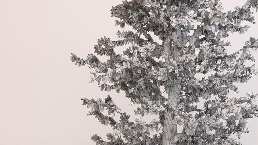 Tree Birch royalty-free 3d model - Preview no. 9