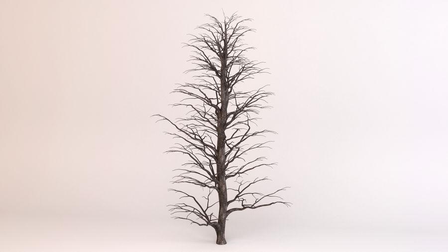 Tree Birch royalty-free 3d model - Preview no. 6