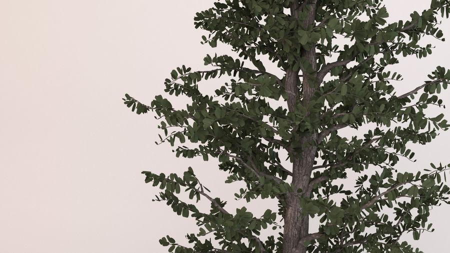 Tree Birch royalty-free 3d model - Preview no. 3
