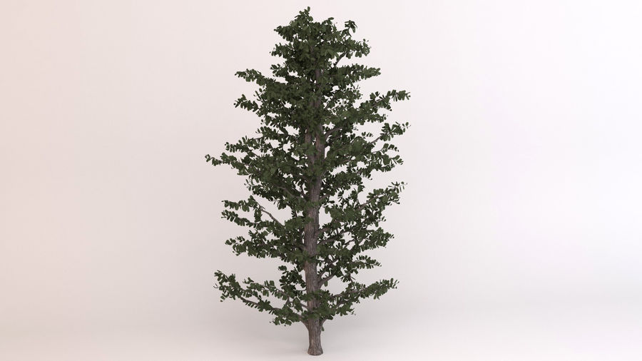Tree Birch royalty-free 3d model - Preview no. 2