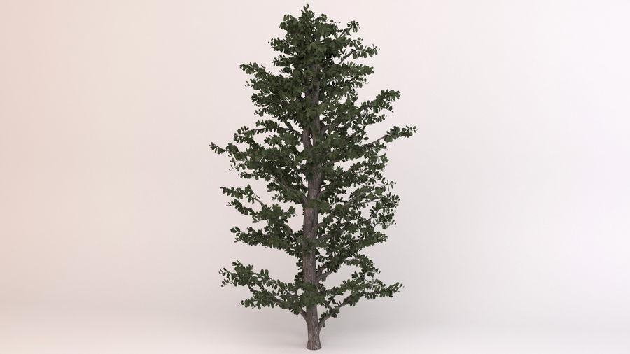 Tree Birch royalty-free 3d model - Preview no. 7