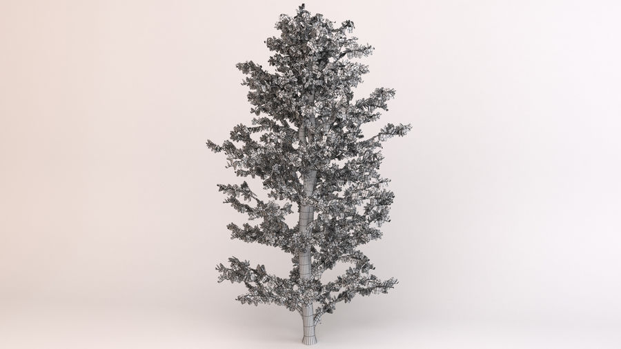 Tree Birch royalty-free 3d model - Preview no. 8