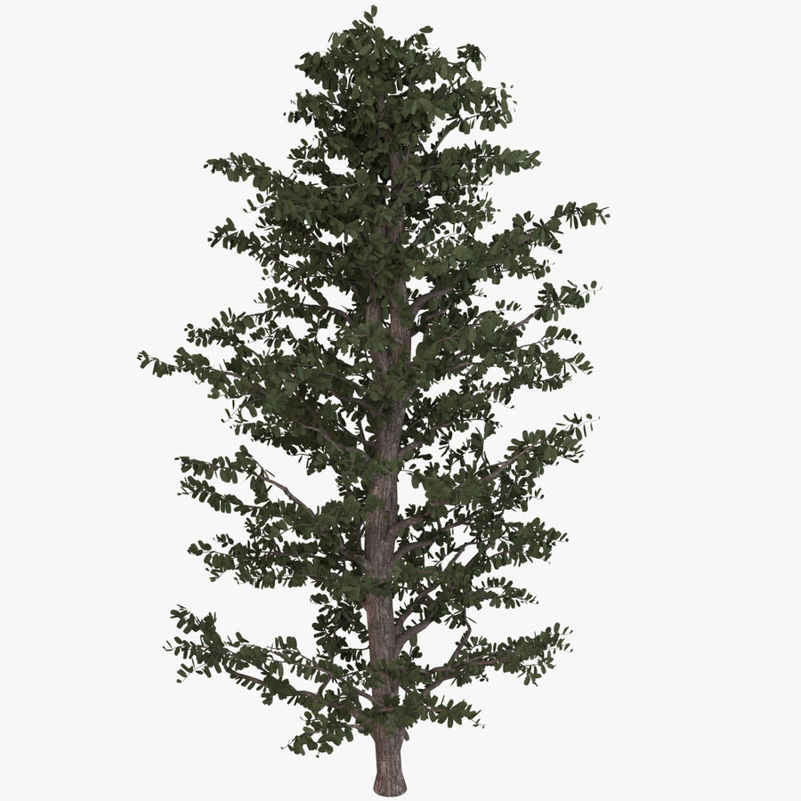 Tree Birch royalty-free 3d model - Preview no. 1