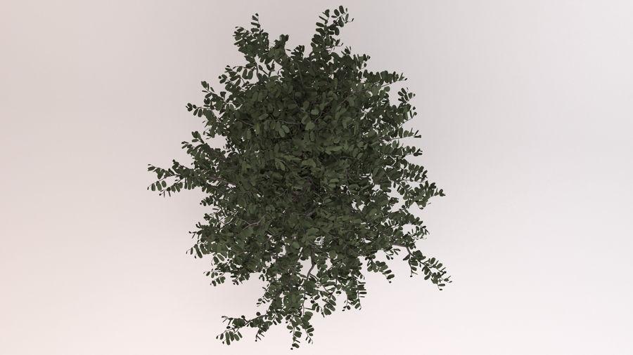 Tree Birch royalty-free 3d model - Preview no. 5
