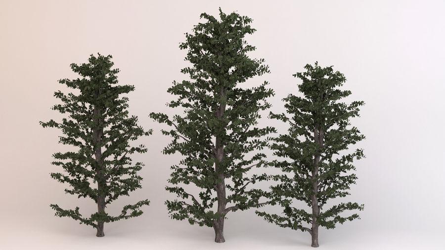 Tree Birch royalty-free 3d model - Preview no. 4