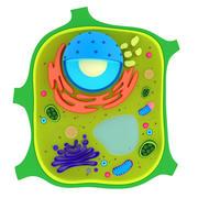 Célula vegetal modelo 3d