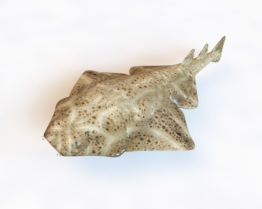 Ryba Angelshark royalty-free 3d model - Preview no. 1