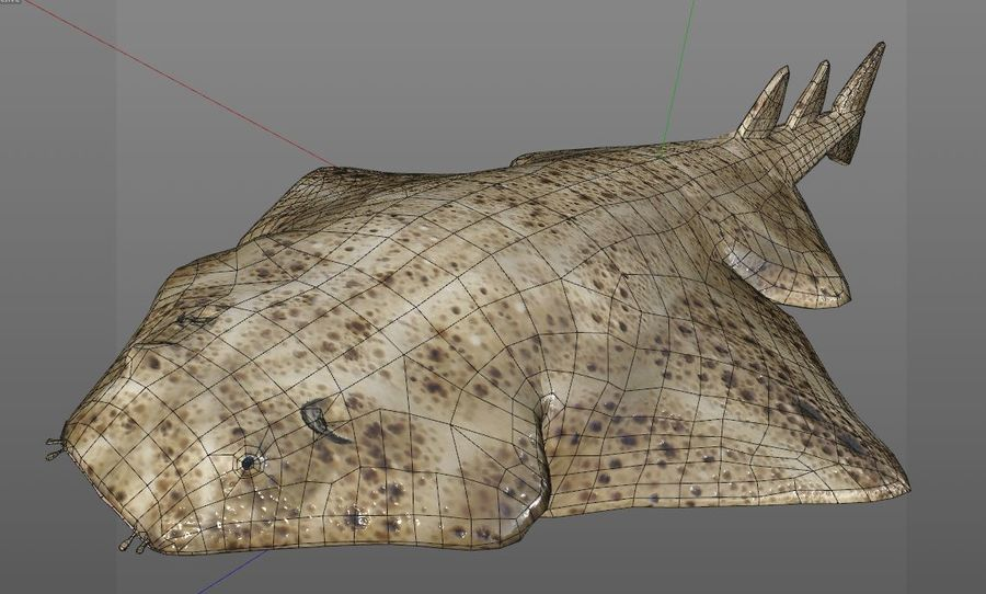 Ryba Angelshark royalty-free 3d model - Preview no. 12