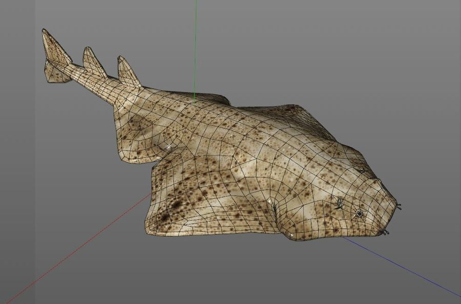 Ryba Angelshark royalty-free 3d model - Preview no. 11