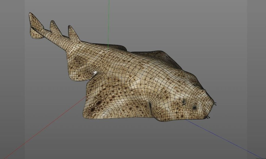Ryba Angelshark royalty-free 3d model - Preview no. 10