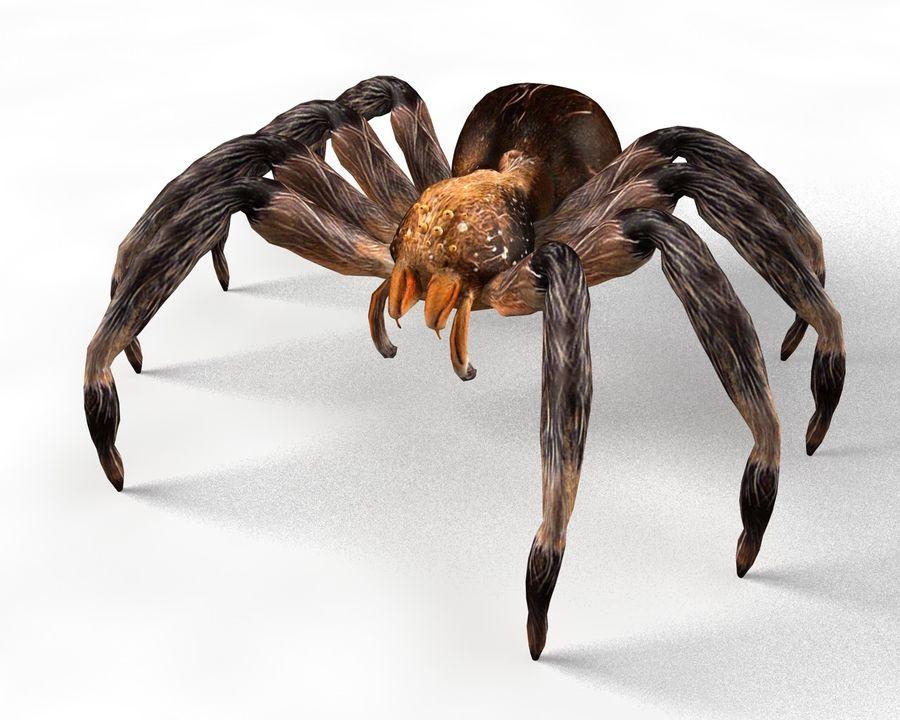 Tarantula Spider Rigged royalty-free 3d model - Preview no. 7