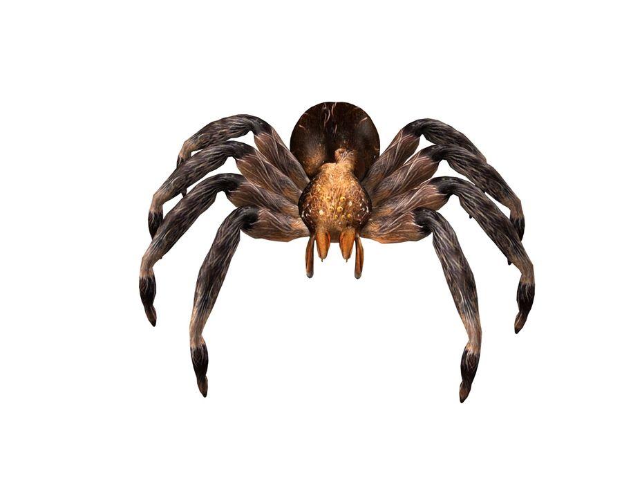 Tarantula Spider Rigged royalty-free 3d model - Preview no. 6