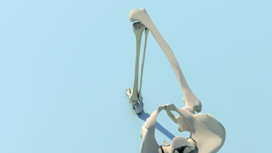人間の下肢の足と足の骨の解剖学 royalty-free 3d model - Preview no. 10