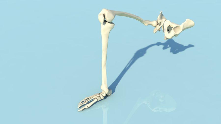 人間の下肢の足と足の骨の解剖学 royalty-free 3d model - Preview no. 6
