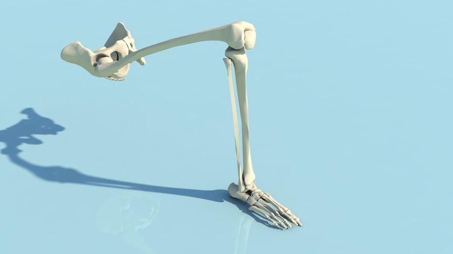 人間の下肢の足と足の骨の解剖学 royalty-free 3d model - Preview no. 16