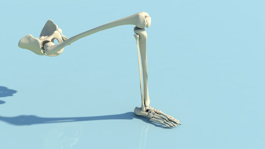 人間の下肢の足と足の骨の解剖学 royalty-free 3d model - Preview no. 15