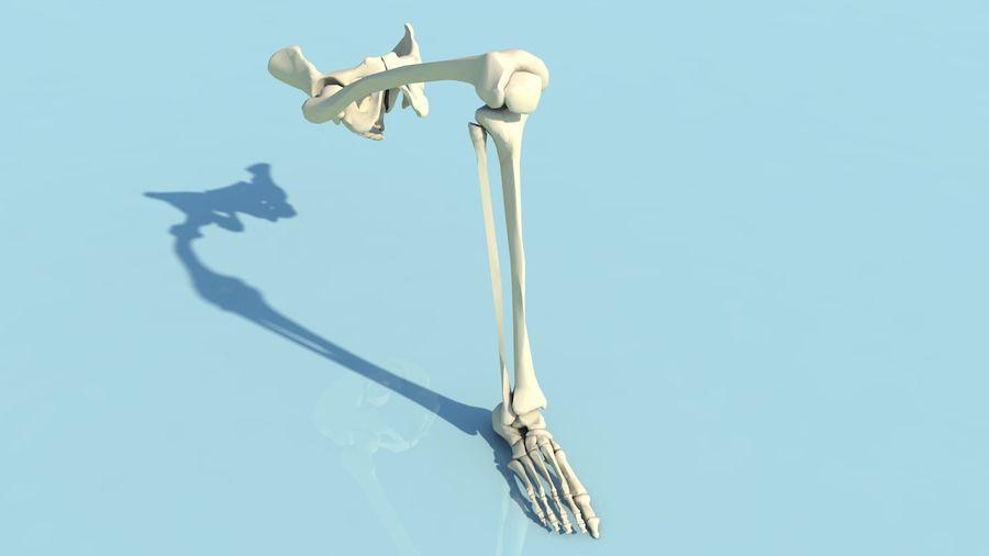 人間の下肢の足と足の骨の解剖学 royalty-free 3d model - Preview no. 2