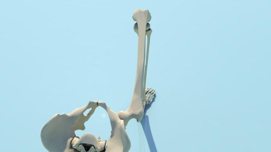 人間の下肢の足と足の骨の解剖学 royalty-free 3d model - Preview no. 11