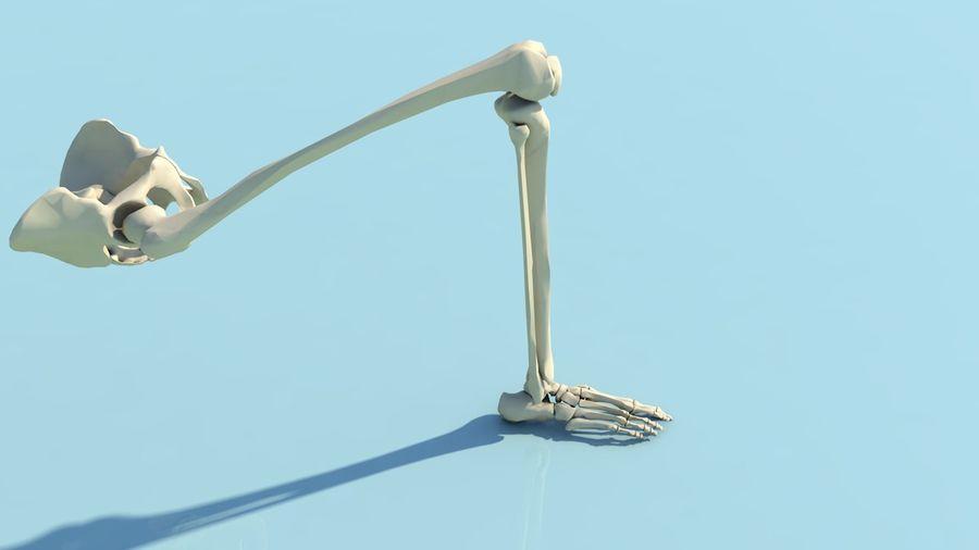 人間の下肢の足と足の骨の解剖学 royalty-free 3d model - Preview no. 14