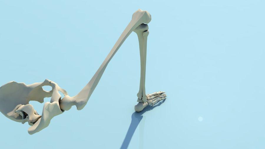 人間の下肢の足と足の骨の解剖学 royalty-free 3d model - Preview no. 12