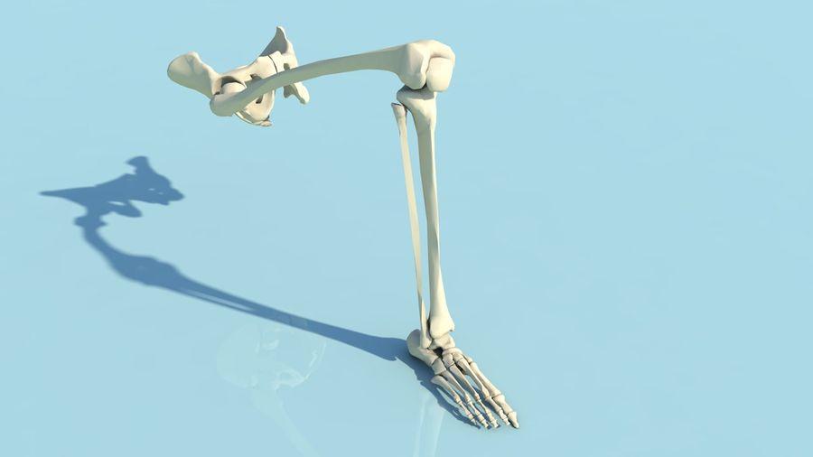 人間の下肢の足と足の骨の解剖学 royalty-free 3d model - Preview no. 1