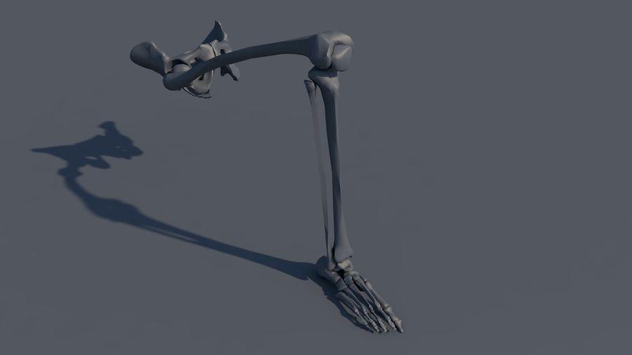 人間の下肢の足と足の骨の解剖学 royalty-free 3d model - Preview no. 17