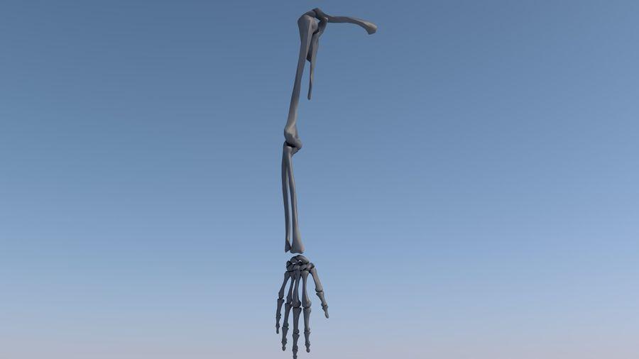 Ludzka kończyna kończyny górnej i anatomia kości ręki royalty-free 3d model - Preview no. 15