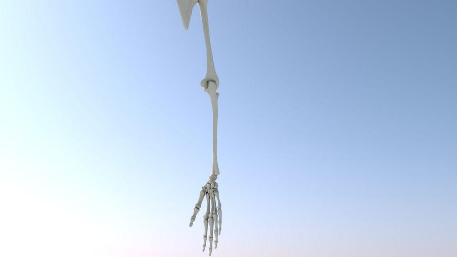 Ludzka kończyna kończyny górnej i anatomia kości ręki royalty-free 3d model - Preview no. 10
