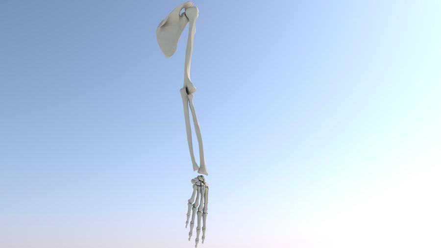 Ludzka kończyna kończyny górnej i anatomia kości ręki royalty-free 3d model - Preview no. 13