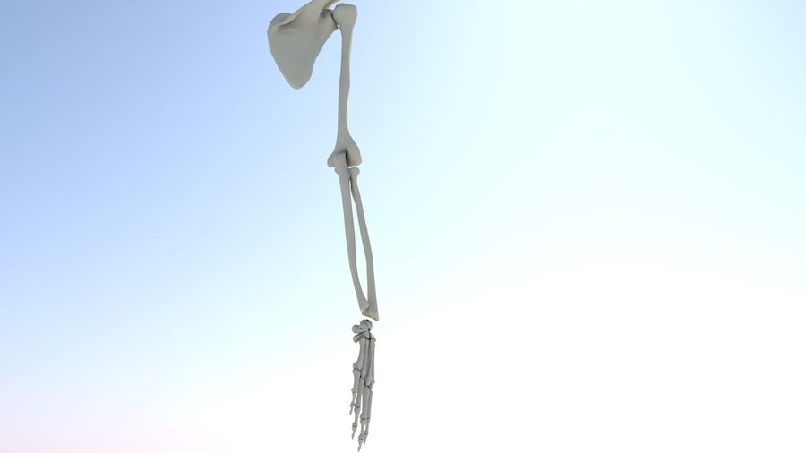 Ludzka kończyna kończyny górnej i anatomia kości ręki royalty-free 3d model - Preview no. 12