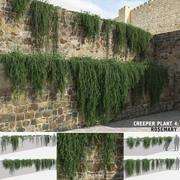 Растения розмарина (+ GrowFX) 3d model