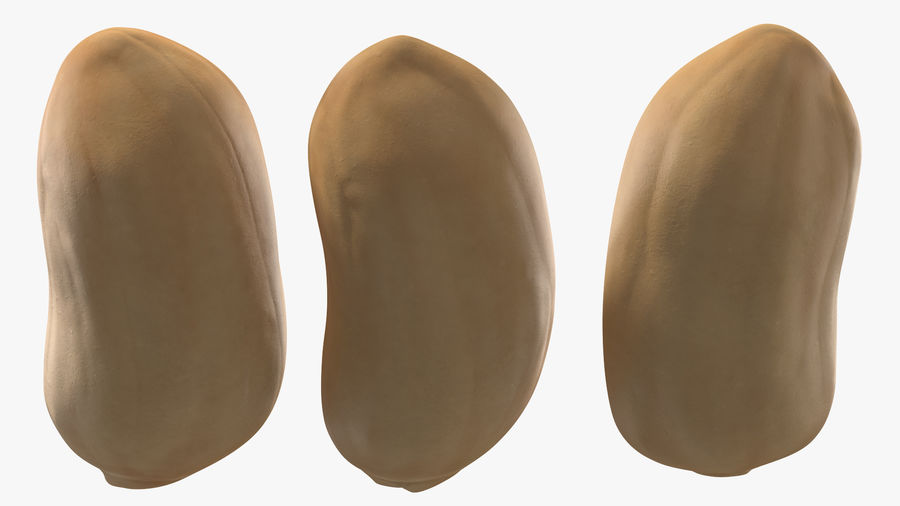 Peanut Seeds Peeled royalty-free 3d model - Preview no. 13