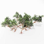 Manzanita tree 3d model