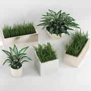 Plantas de interior: um conjunto de vasos de plantas 3d model