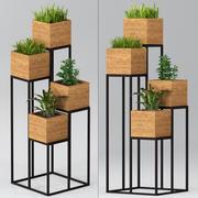 室内植物:带有植物的架子 3d model