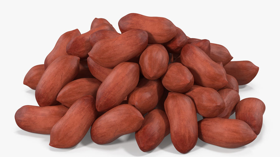 Peanuts Seed royalty-free 3d model - Preview no. 4