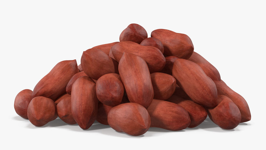 Peanuts Seed royalty-free 3d model - Preview no. 11