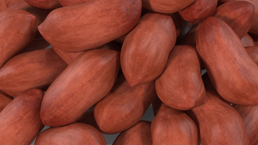 Peanuts Seed royalty-free 3d model - Preview no. 8