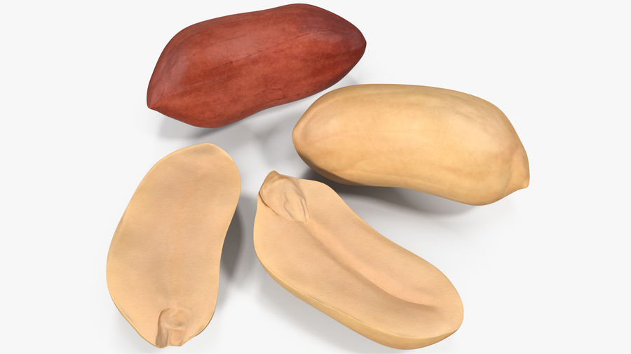 Peanut Seeds 2 royalty-free 3d model - Preview no. 2