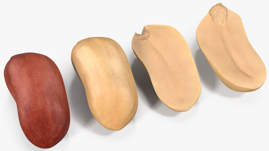 Peanut Seeds 2 royalty-free 3d model - Preview no. 17